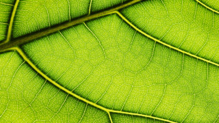 ESG in CEE: A cleaner, greener, kinder future for M&A in 2021 and beyond
